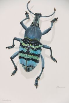 Bernard durin's study of a beetle from new guinea