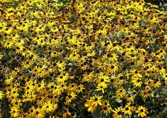 Xeriscape Texas Native Plants For Drought Tolerant, Resistant Design — Austin Native Landscaping - Xeriscape. Design. Installation. Huge plant list!!
