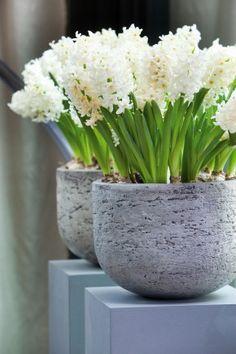 Witte hyacinten voor binnen. Zet veel bloemen van dezelfde soort in dezelfde kleur bij elkaar voor een stoer en stevig effect. Bloemen Bureau Holland