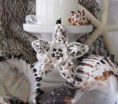 Black & White Seashell Flower Sea Star Ornament Art by SeaPosie, $25.00
