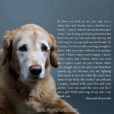 All About The Intelligent Golden Retriever Pups Temperament I Love Dogs, Cute Dogs, Chien Golden Retriever, Golden Retrievers, Golden Retriever Quotes, Game Mode, Pet Loss Grief, Dog Poems, Pet Remembrance