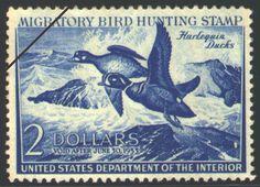 Harlequin Ducks, by John H. Dick (1952-1953)