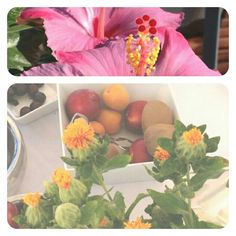 Flower for breakfast