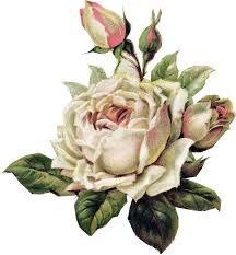 Image result for vintage flowers