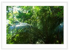 04 - Floresta tropical 2