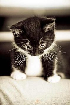 This kitty reminds me of BV - Black Velvet, the kitten Christine brought home from the mall one day, even though she is allergic to cats.
