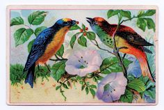 Free Vintage Clip Art - Bright Birds advertising Card - The Graphics Fairy