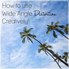 Wide angle lenses are the queens of distortion! They will stretch, elongate, and generally exaggerate the size of objects through the viewfinder. The cause of the distortion is that the lens…