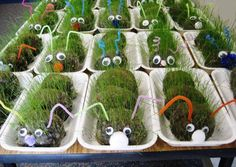 grass caterpillar craft project Too bad my kids are too old for this.will need to keep this idea for potential grandkids. Hungry Caterpillar Activities, Caterpillar Craft, Very Hungry Caterpillar, Nature Activities, Spring Activities, Preschool Activities, Preschool Garden, Chenille, Garden Theme