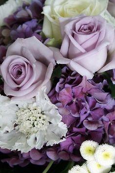 Gypsy Purple home......
