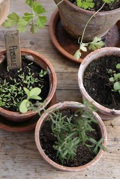 My little herb garden { By Modern Country }