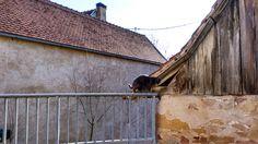Un gatito se pasea por los tejados de las casas de ...