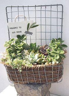 Chels Green 多肉植物の寄せ植えバスケットづくり
