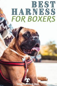 Confused about all the options when looking for the best harness for your Boxer? Follow along as we compare fit, cost, quality, durability & more! #dogs #boxers #doglove Boxer Dog Breed, Boxer Puppies, Train Information, Best Swimmer, Cat Harness, Animal Nutrition, Dog Items, Healthy Pets