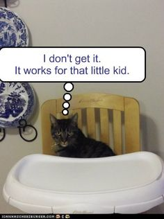 "Cat in high chair says, ""I don't get it. It works for that little kid.""     pinned by www.affordablecomp.net"