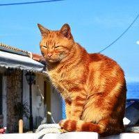 #dogalize Animali in vacanza in traghetto: i problemi che possono avere #dogs #cats #pets