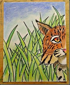 Chalk pastels  Videos of bobcats to watch before drawing!!