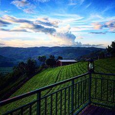 @Regrann from @littleljm -  Sorwathe tea plantation, Rwanda #rwanda #clouds #hashtagrwanda #Regrann  ________________________________________ #nature #view #sky #hills #landscapecaptures #colorful #landscape_lovers #ontheroad #bluesky #nature_lovers #blue #wonderful #nature_perfection #tourism #ig_great_pics #trip #travel #ig_great_shots #igers #instapic #ig_worldclub #ig_captures #photooftheday #green #wonderful_places #roadtrip ______________________________________