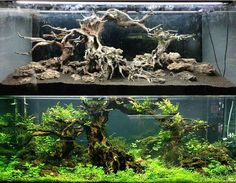 Aquascaping before after