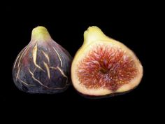 FROM TWIGS TO FIGS: How to root cuttings from fig twigs
