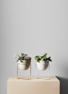 DIY Plant Stand ideas to Fill Your Home With Greenery Indoor Garden, Garden Pots, Indoor Plants, Small Plants, Green Plants, Belle Plante, Plants Are Friends, Diy Plant Stand, Plate Stands