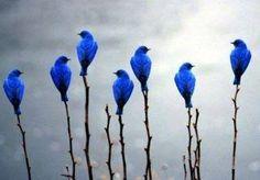 Blue Birds in the mist.