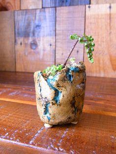 Kusamono by Shouko Saitou Succulents In Containers, Planting Succulents, Suculent Plants, Pottery Handbuilding, Orchid Pot, Mini Bonsai, Bonsai Art, Concrete Pots, Pottery Sculpture
