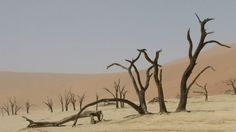 Located in Namib-Naukluft Park in Namibia, Deadvlei (or 'Dead Marsh') is home to a forest of 900-year-old dead trees, blackened but does not decompose because of the dry conditions.