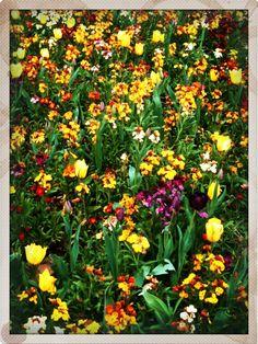 pretty things: spring flowers