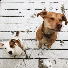 "6,777 Likes, 126 Comments - Sarah Hart (@homeiswherethehartis) on Instagram: ""These southern dogs sure do love the snow."""