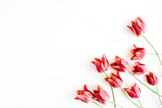Red tulips by Floral Deco on @creativemarket