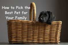 How to Pick the Best Pet for Your Family #adoptdontshop #pet #petcare Pet Care, Adoption, Good Things, Pets, Sweet, Animals, Foster Care Adoption, Candy, Animales