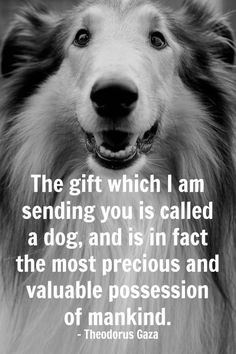 the best gift ever is a DOG!