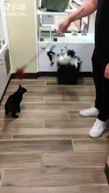 16 Cute Cat Memes - images/slides added under category of Popular Memes and Images Cute Funny Animals, Funny Animal Pictures, Funny Cute, Cute Cats, Hilarious, Crazy Cat Lady, Crazy Cats, Cute Cat Memes, Animal Memes