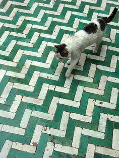 Marrakech green tiles and cat