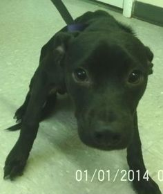 2 / 6    Petango.com – Meet Charlie, a 6 months 5 days Terrier / Mix available for adoption in Elk City, OK Contact Information Address  1022 S. Main St, Elk City, OK, 73644  Phone  (580) 225-7222  Email  elkshelter@yahoo.com