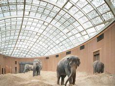 Elephant House, Copenhagen Zoo / Foster + Partners