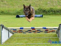A1K9 Dog Training