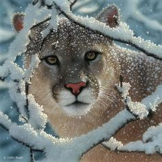 big cats   Big Cat Paintings, Wild Cat Art Prints, Tiger, Lion, Snow Leopard ...