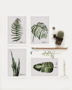 Rafa-kids : Botanic Watercolor painting