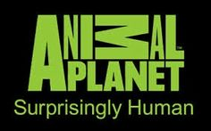 Animal Planet.  I can watch this channel all day.