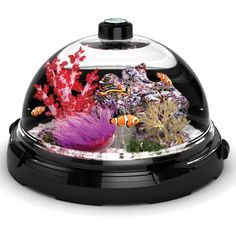 HOW COOL IS THIS!!   Tabletop Saltwater Aquarium comes with advanced filtration   Home Harmonizing