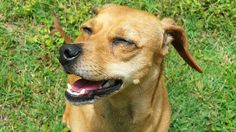 Hot Weather Pet Care - Local news, weather, sports Savannah | WSAV On Your Side