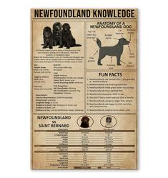 Printed and shipped from San Francisco, CA United States. Edge-to-edge print with no borders. Printed on 300 GSM paper. Newfoundland, Life Lessons, Life Hacks, Poster Prints, Knowledge, San, Life Lesson Quotes, Newfoundland Dogs, Lifehacks