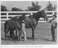 Sweet Tooth, dam of Our Mims and Alydar; shown with her 1977 foal by Key to the Mint. Later named Sugar and Spice, she became a Gr. 1 winner of the Mother Goose and Ashland Stakes. Calumet Farm, Kentucky Horse Park, Sport Of Kings, Thoroughbred Horse, Racehorse, Draft Horses, Horse Farms, Show Horses, Courses