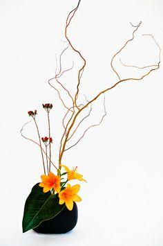 Exposición Ikebana by CaDs, via Flickr