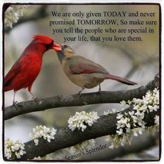 Cardinals feeding each other as many wild birds do, during courtship. Pretty Birds, Love Birds, Beautiful Birds, Beautiful Butterflies, Beautiful Things, Love Quotes, Inspirational Quotes, Heaven Quotes, Deep Quotes