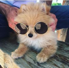 Cute Sunglasses https://tumblr.com/ZnVlHd2OD7q6E