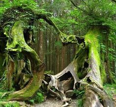 This looks like one tree giving a helping hand to another tree, who has fallen.