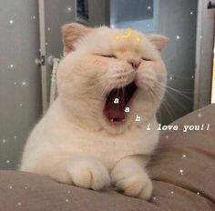 ideas for memes apaixonados gatos Cute Cat Memes, Cute Love Memes, Funny Cats, Humorous Cats, Funny Memes, Cute Kittens, Cats And Kittens, Ragdoll Cats, Cute Baby Animals